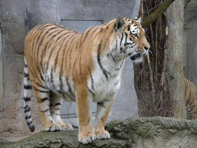 Leipziger Zoo Eindrücke 2
