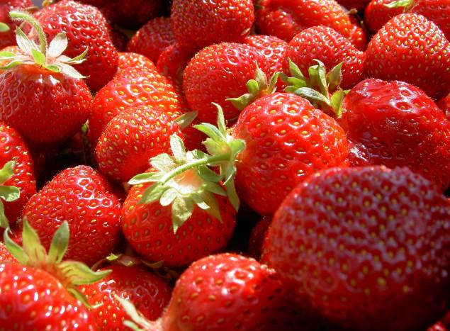 Erdbeeren-WJP-1