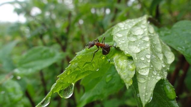 ants-766487_640
