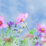 wild-flowers-571940_1280